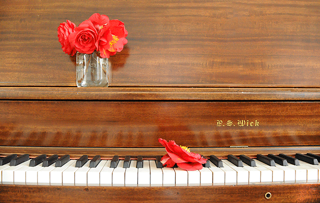 Piano-Camellia